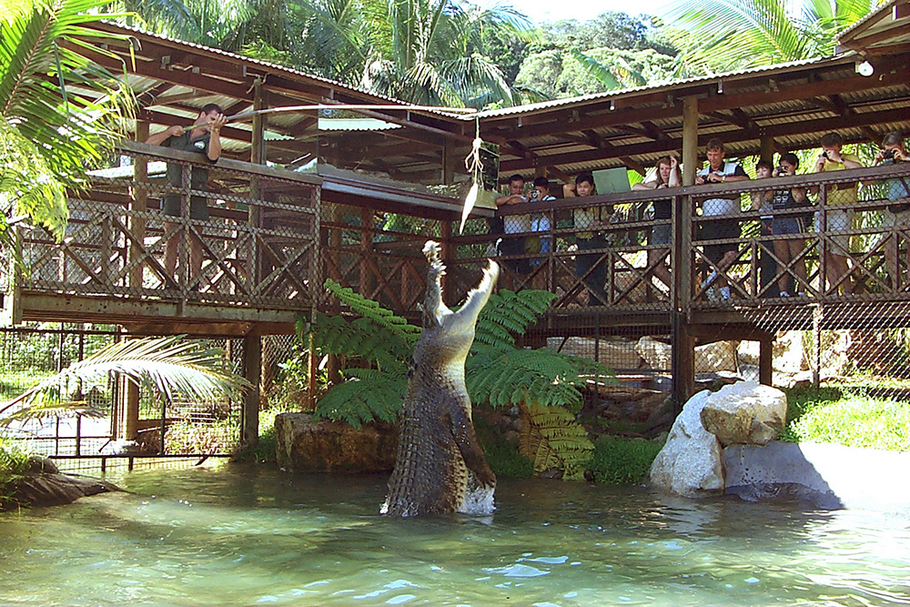 Best Crocodile Tours In Cairns